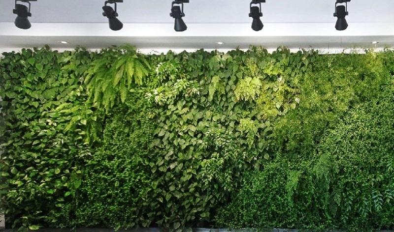 Tùy theo không gian mà chọn kích thước tường cỏ phù hợp