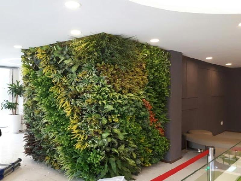 Nhiều ưu điểm của tường cây giá so với các loại cây khác trên thị trường